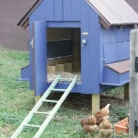 Our Painted Chicken Coop featuring Clark & Kensington