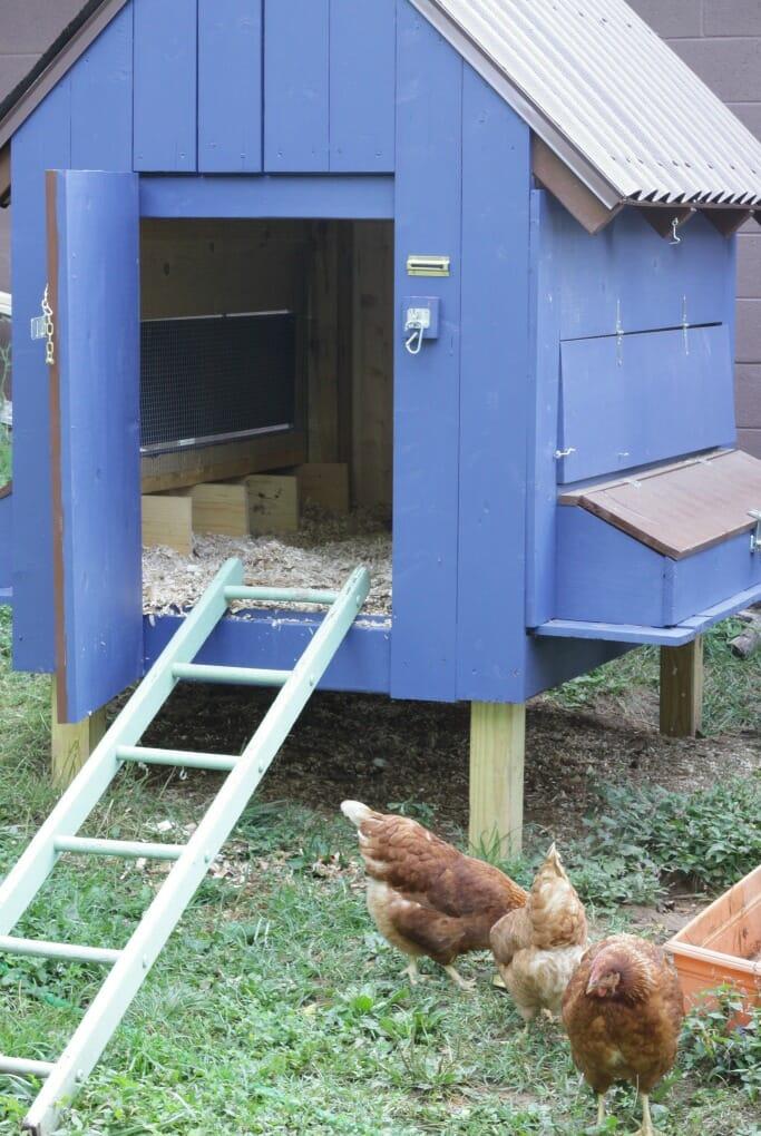 Cobalt Blue Chicken Coop