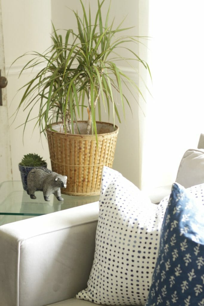 bring-houseplants-indoors-for-fall