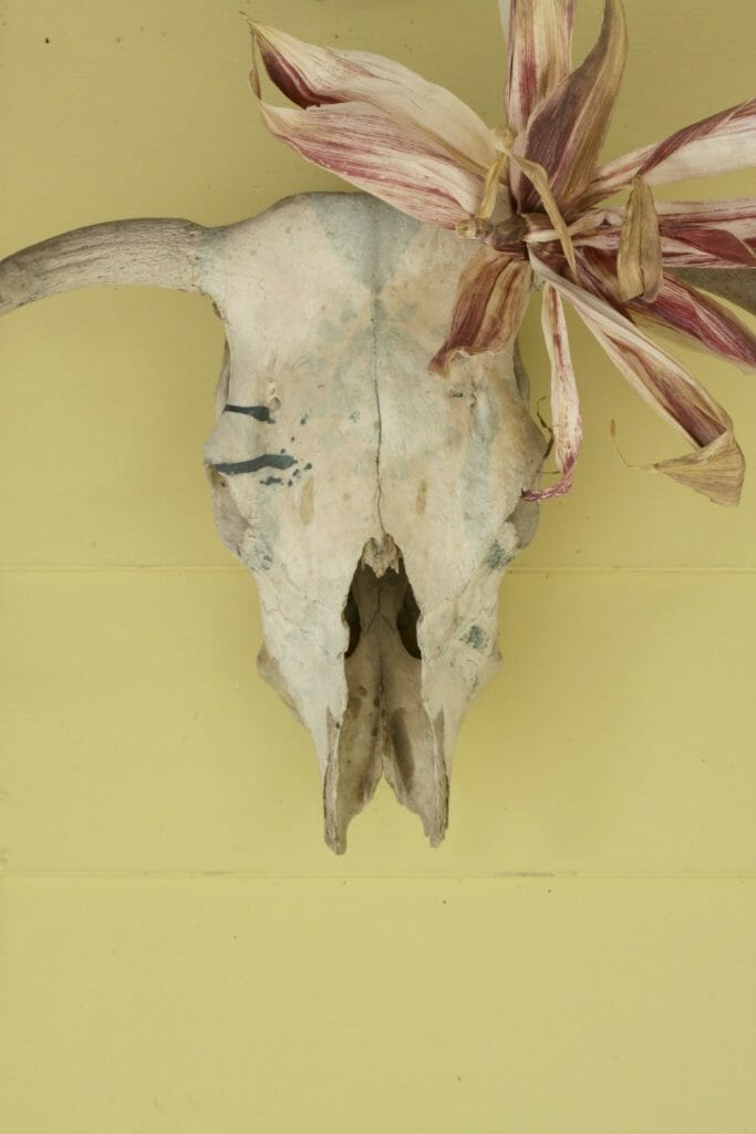 fall-bull-skull-corn-husk-flower