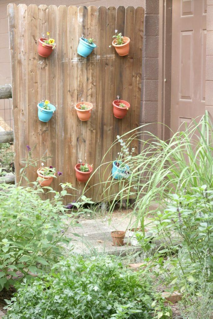 fall-herb-garden-pansies