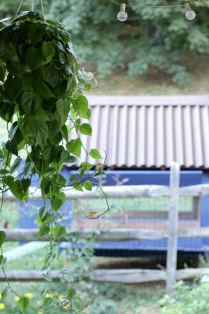 Hanging-Plant-and-chicken-coop