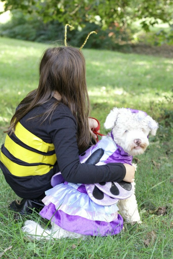 Child & Dog Costume Pair- Butterfly & Bublebee