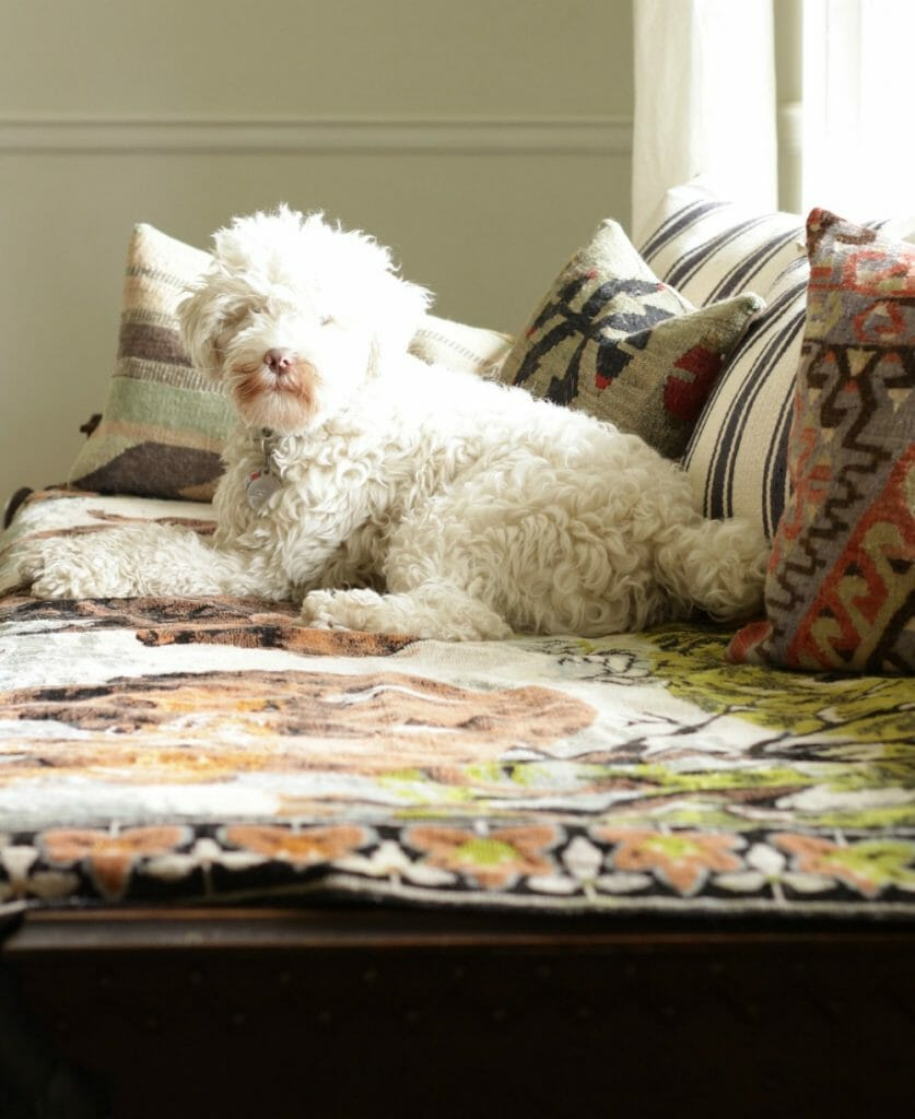Snowball on Daybed