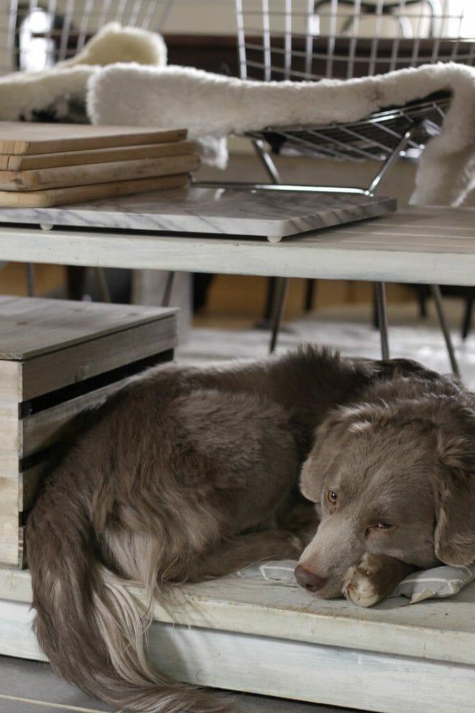 Dog Bed on Kitchen Island