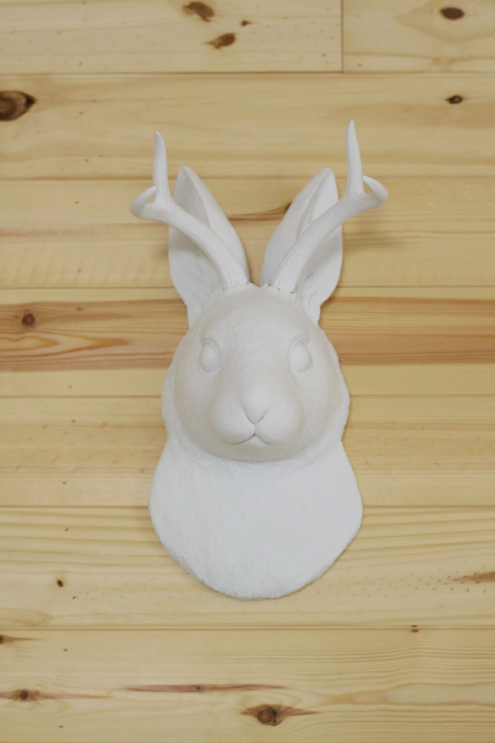white faux taxidermy the jackalope cassie bustamante. Black Bedroom Furniture Sets. Home Design Ideas