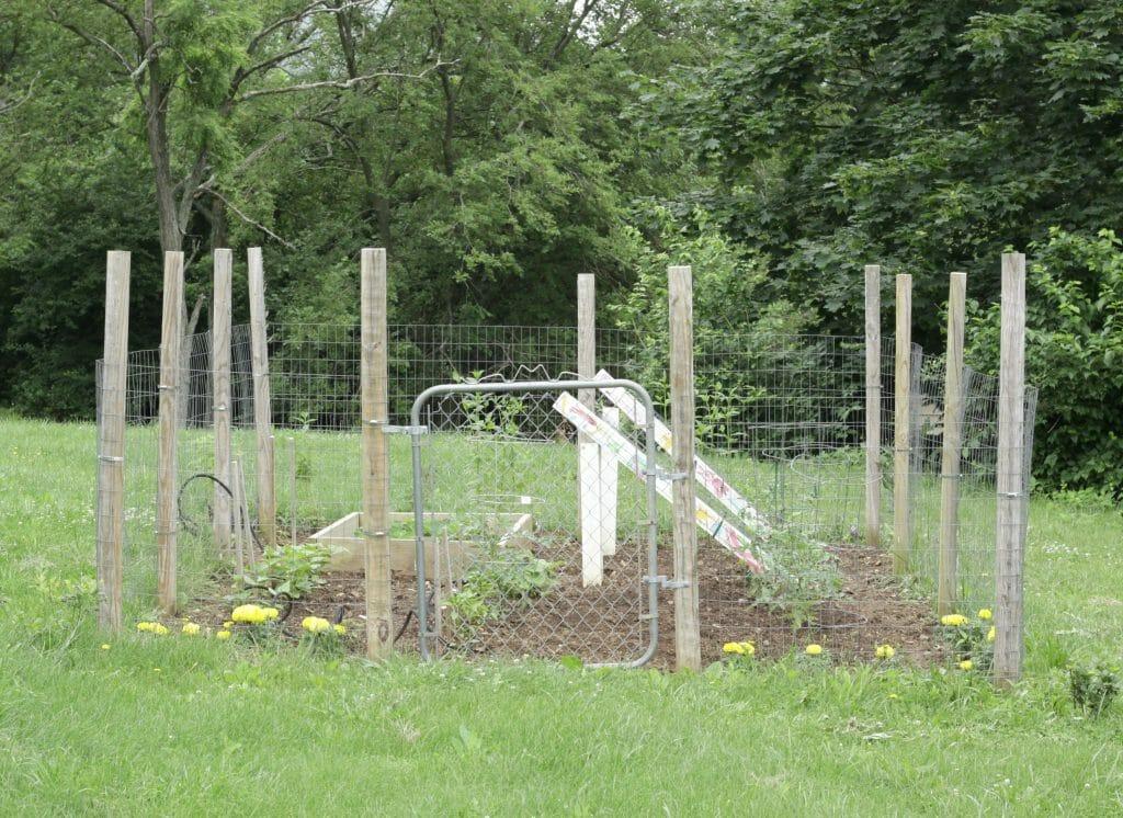 Vegetable garden with vintage gate