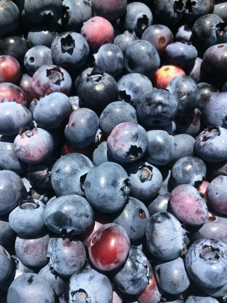 Frog Eye Farm Blueberries