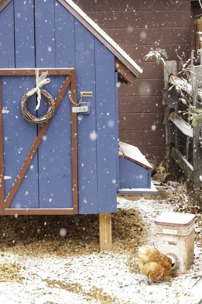 Snowy Blue Christmas Chicken Coop