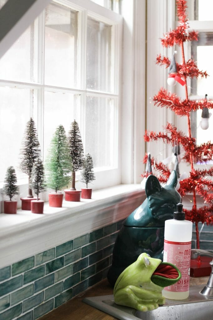 Bottlebrush trees in windowsill