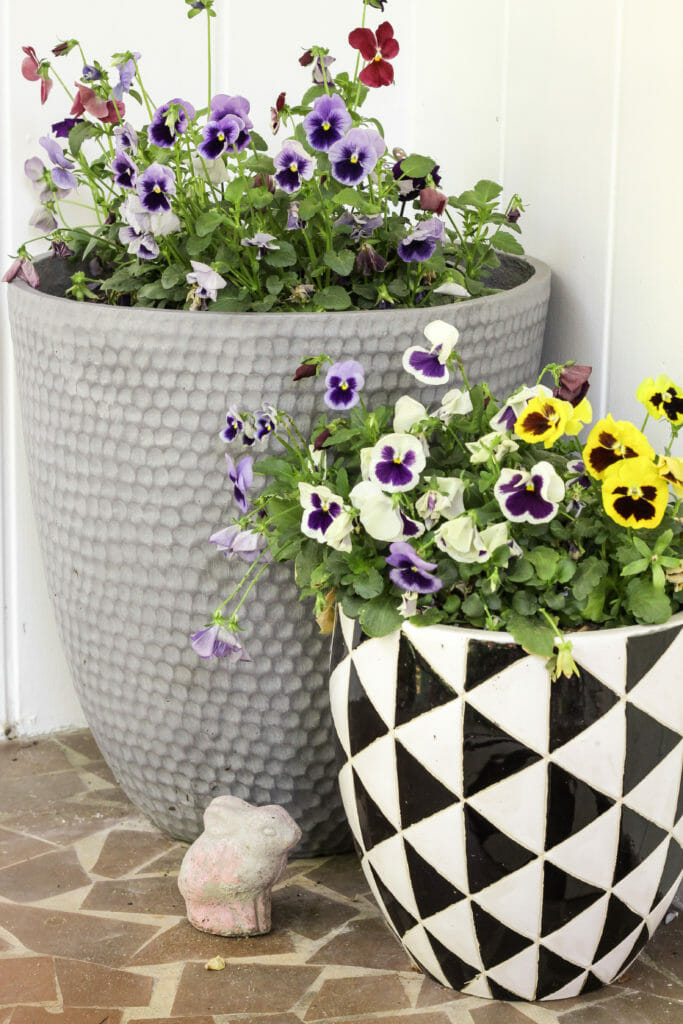 modern planters with pansies