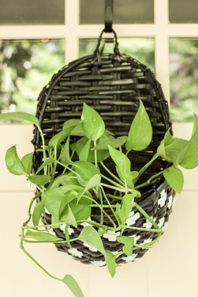 pothos in swiss cross painted door planter